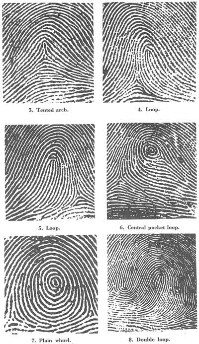 Fingerprints Delectable Fingerprint Patterns