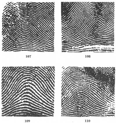 Fingerprints Best Fingerprint Patterns