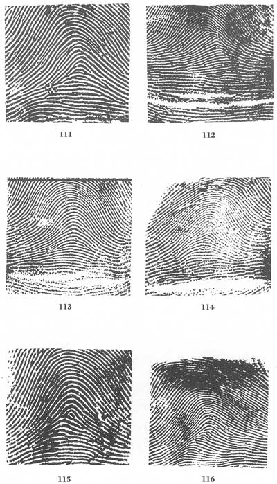 Fingerprints Stunning Fingerprint Patterns