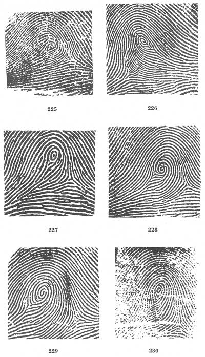 Fingerprint classification essay